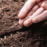 Gem nemt dine frø fra haven til næste sæson
