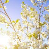 3 smukke forårsplanter til terrassen