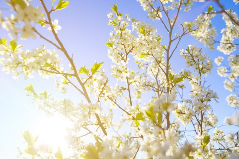 forårsplanter