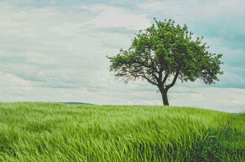 Sådan får du fældet et træ på den best mulige måde